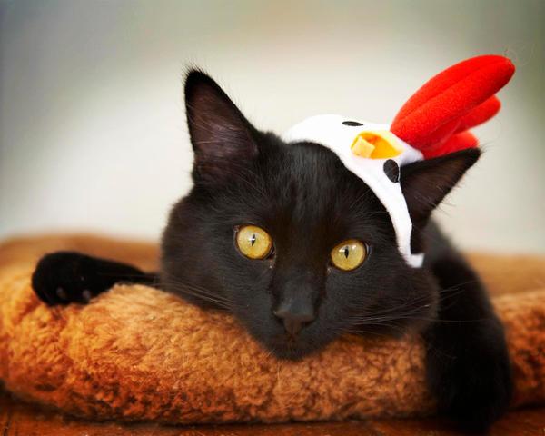 Chicken Cat-Prada by Shiskababe