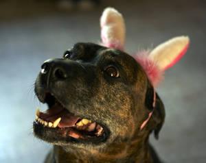 Bunny Benny