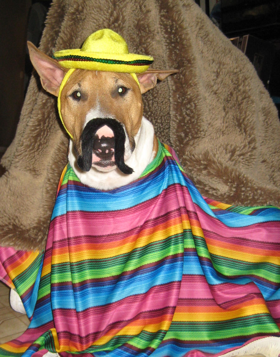 Cinco de Mayo pup by Shiskababe
