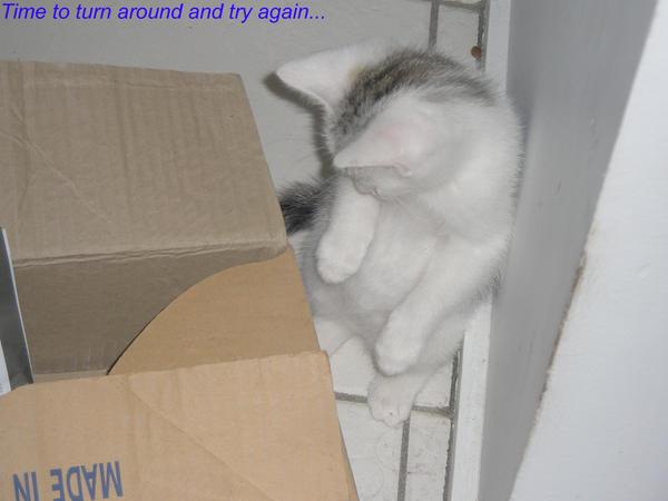 Kitty trilogy Part 3 by sora1589
