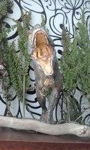cPQxdfXaBKs  tiranosaurus by Ulyanoff