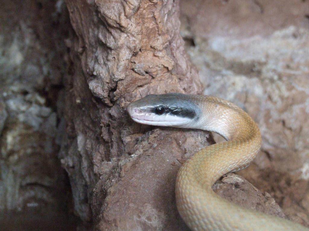 Cave snake by Wanderlouve