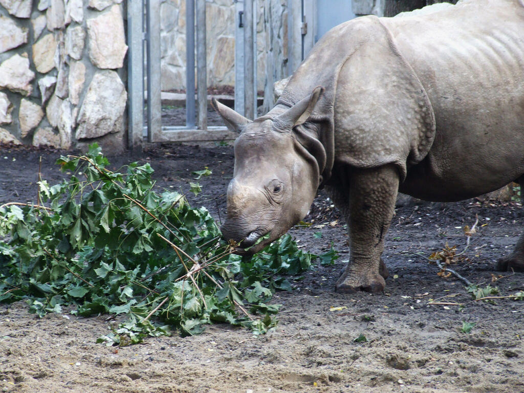 Rhino by Wanderlouve