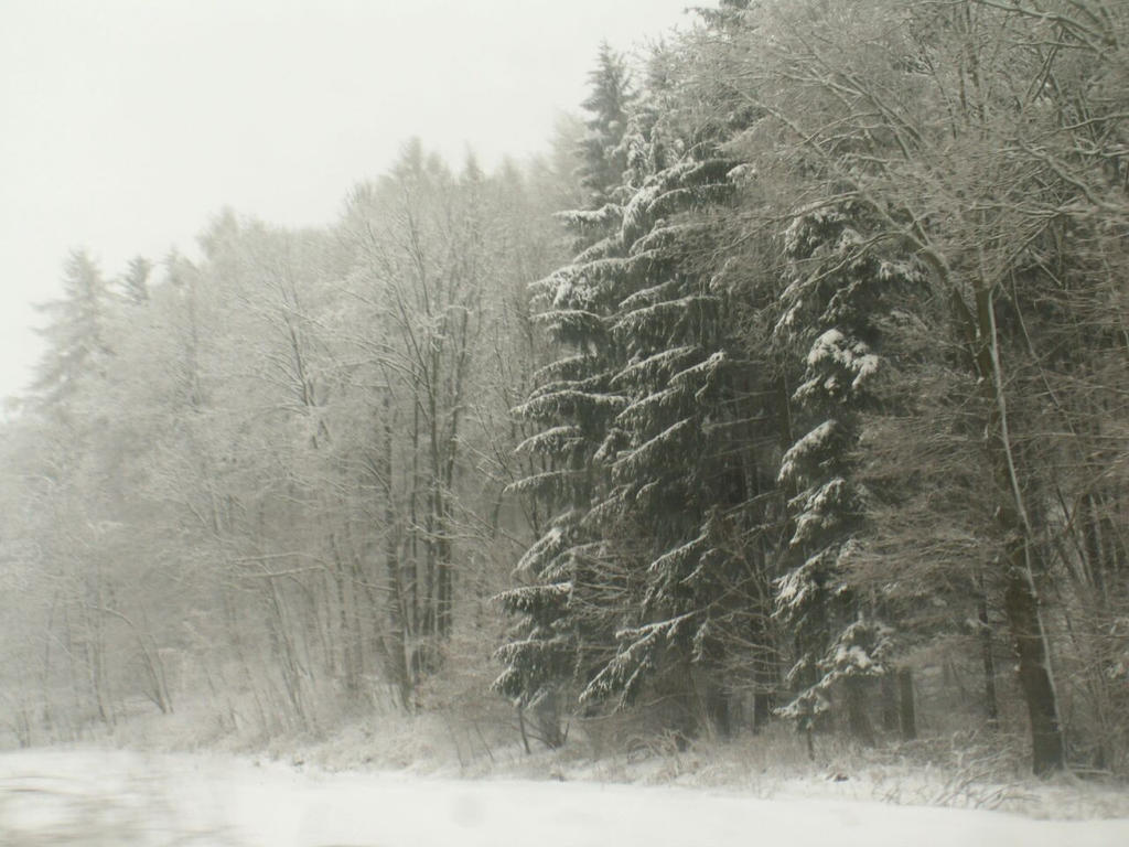Mysterious winter by Wanderlouve