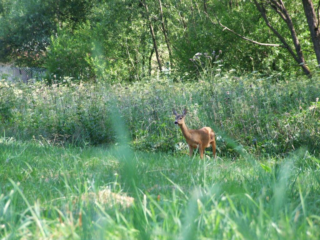 Oh dear, a deer! by Wanderlouve