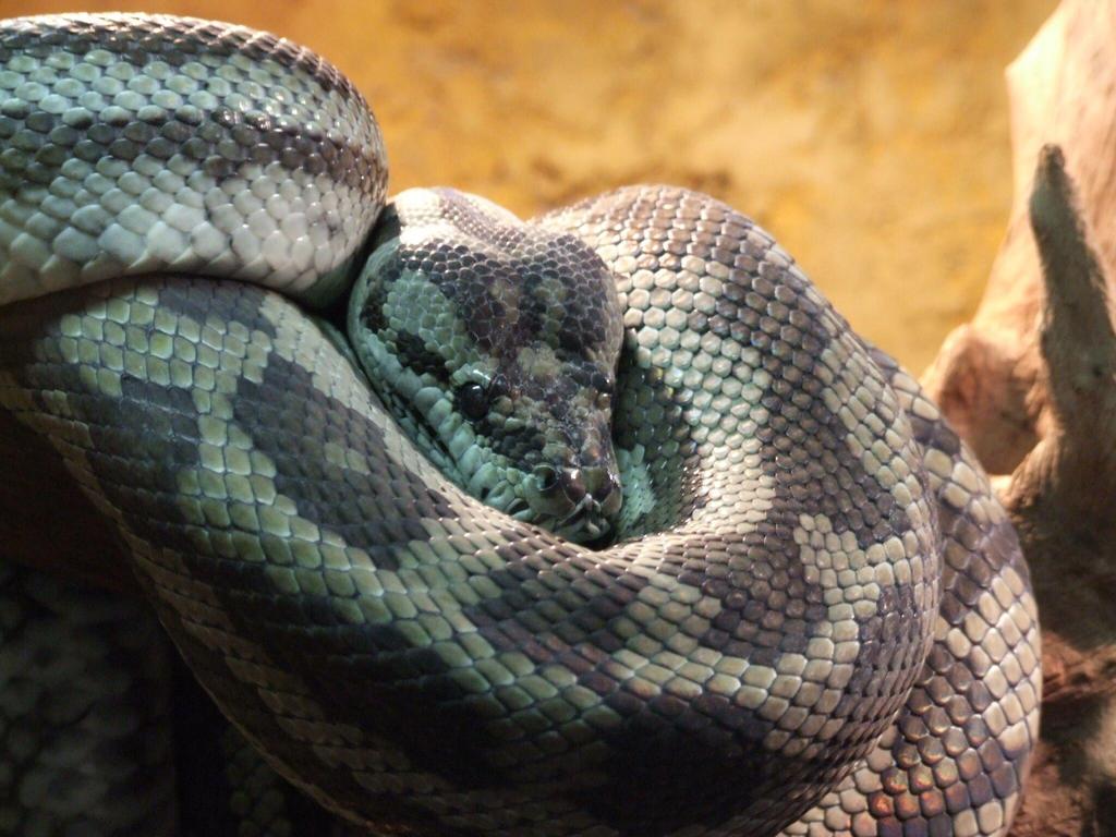 Python by Wanderlouve