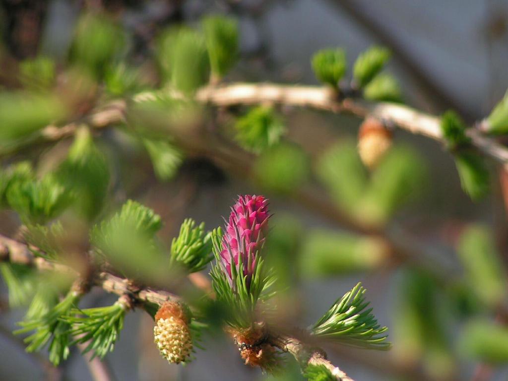 twigs by Wanderlouve