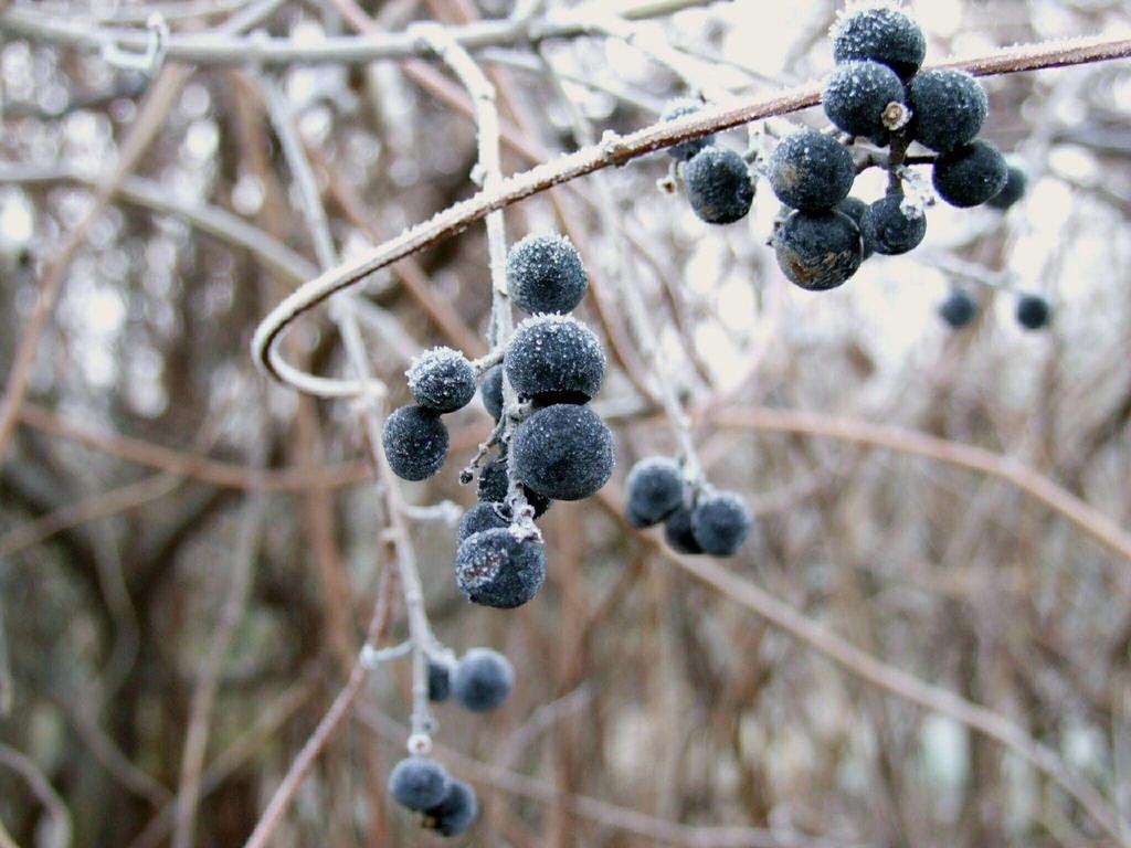Frozen berries by Wanderlouve