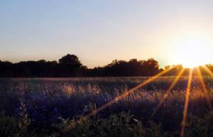 Meadow in the sun by Wanderlouve