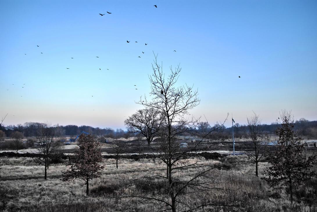Ravens by Wanderlouve