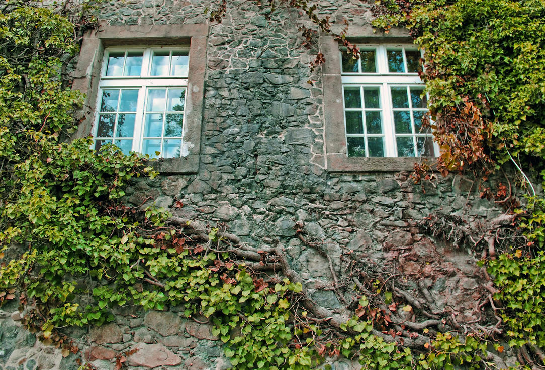 Windows by Wanderlouve
