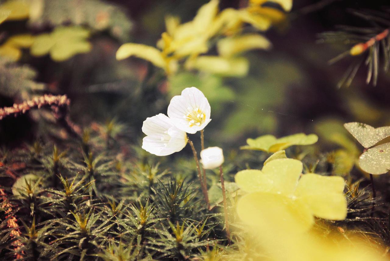 Flower power by Wanderlouve