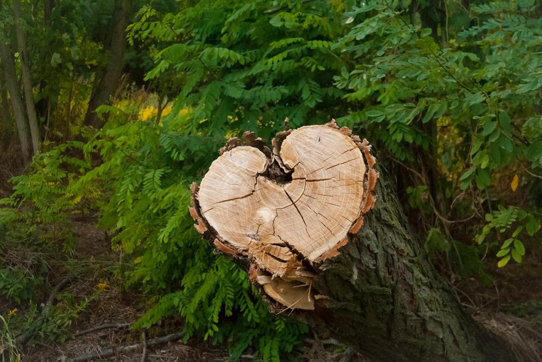 Nature love by Wanderlouve