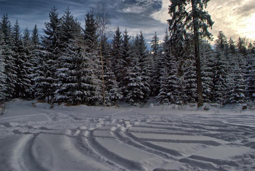 trails by Wanderlouve