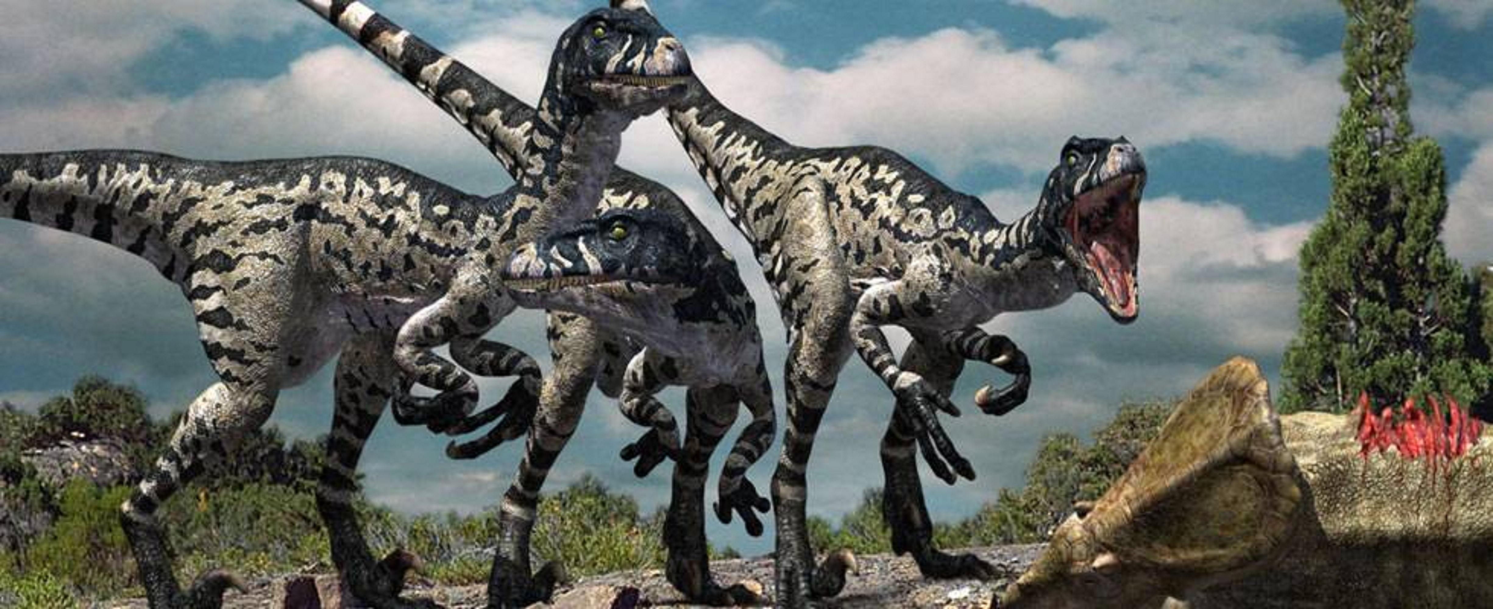 Dromaeosaurus !