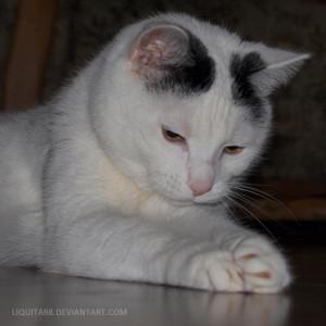Liquita98's Profile Picture
