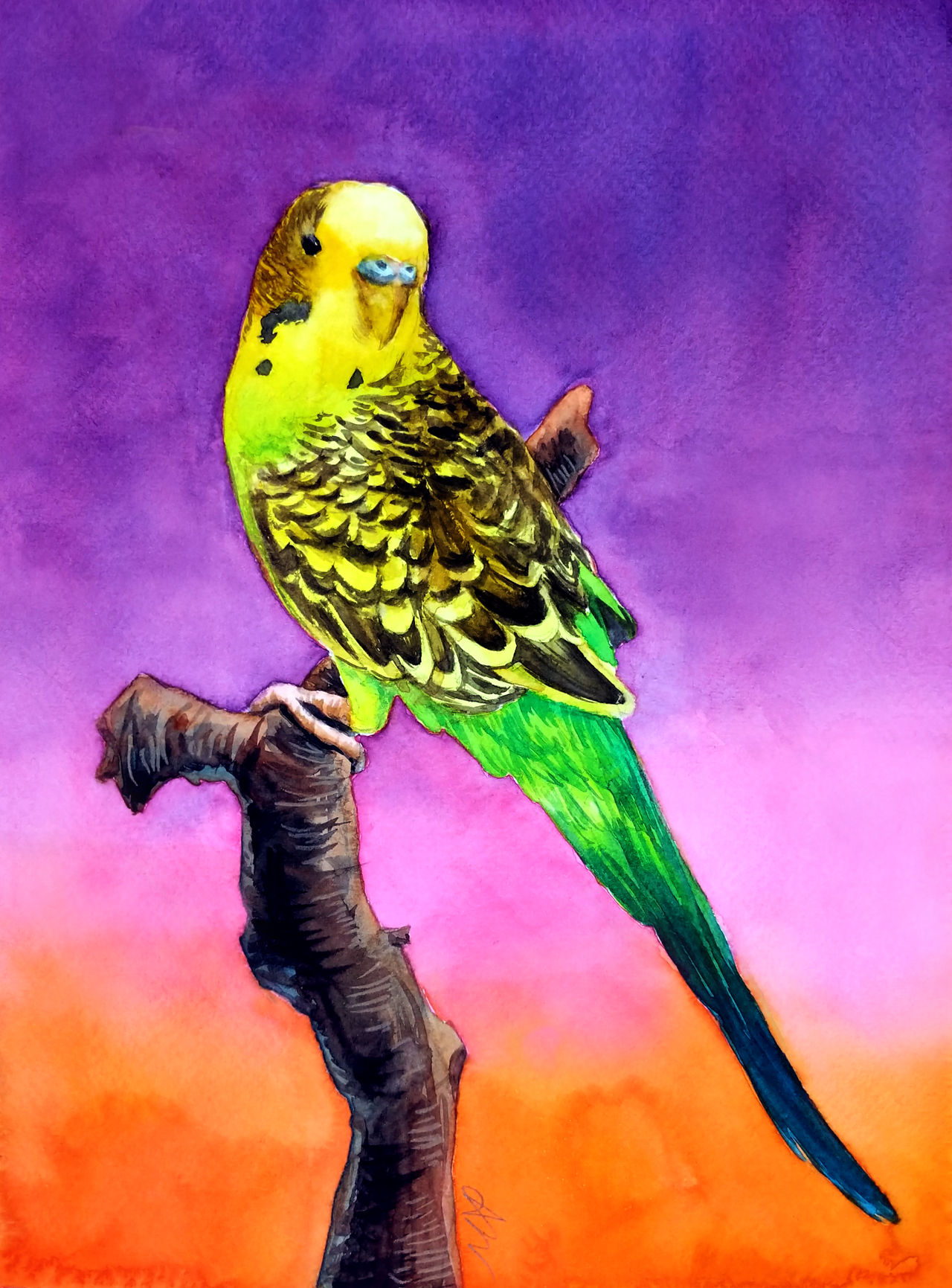 Commission: Jackie the Budgie