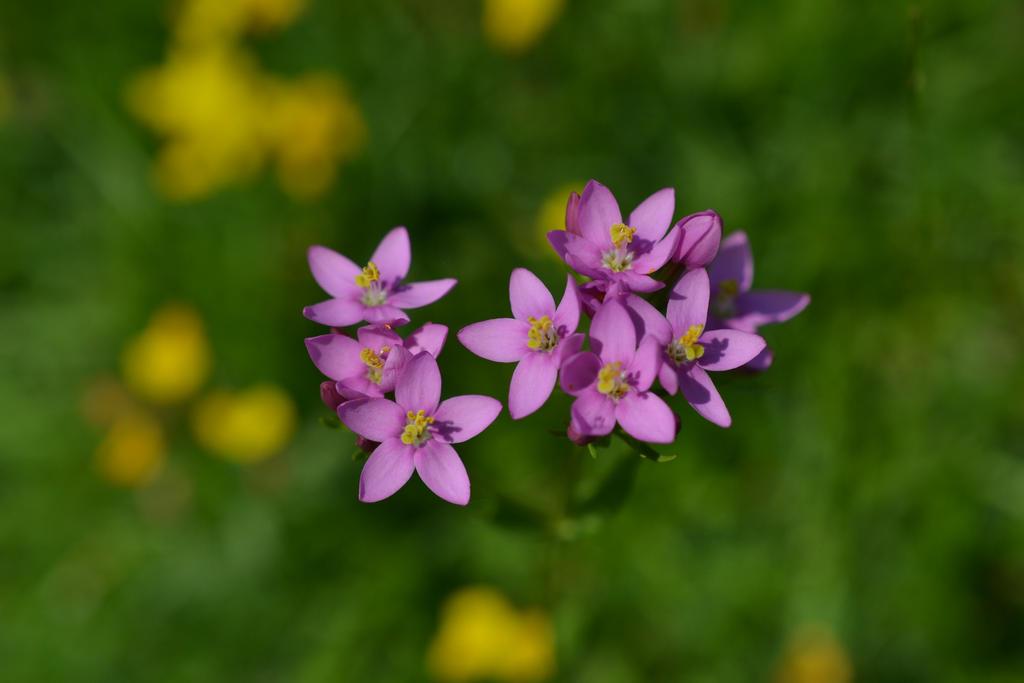 Little Lilac Flowers by sophhks