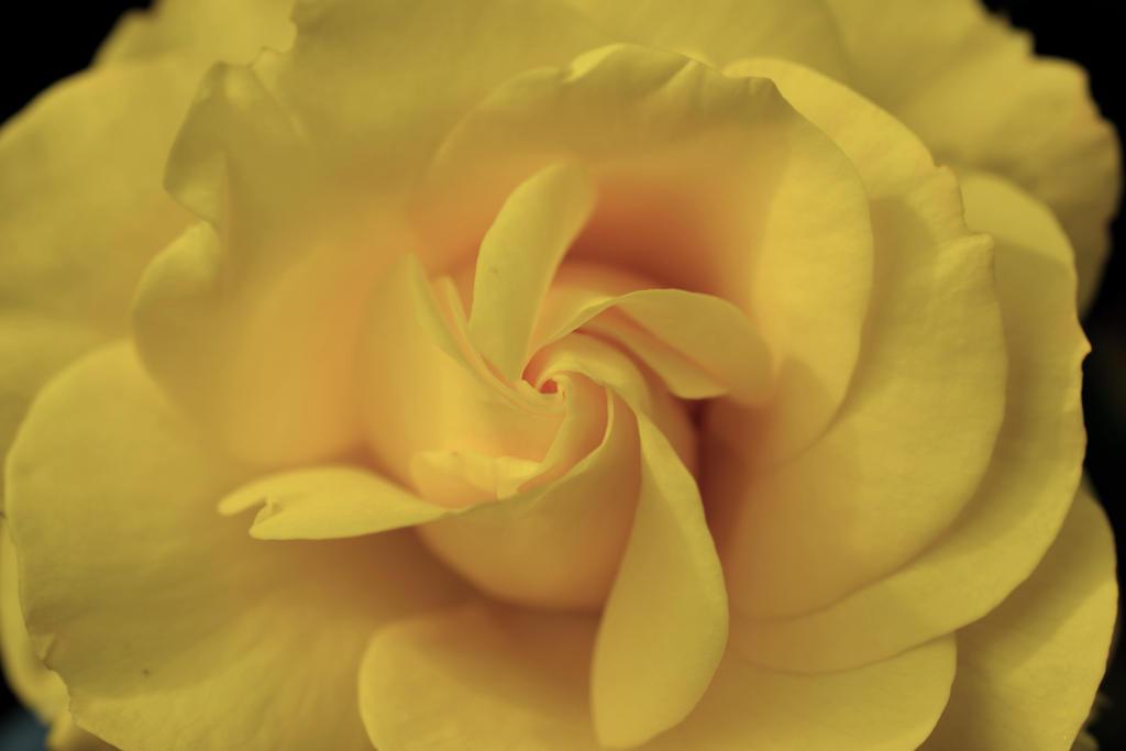 Swirl by sophhks