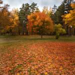 Autumn stock 1