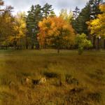 Autumn stock 2