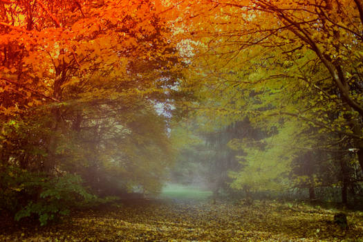 Autumn forest Stock 01