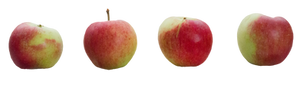 apple stock by cindysart-stock
