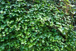 Leaf Stock