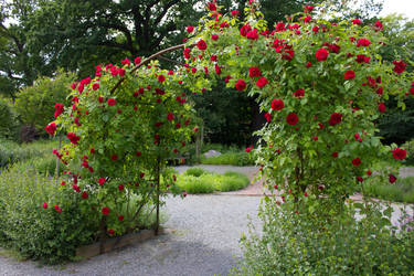 Rose Garden By Cindysart-stock by CindysArt-Stock