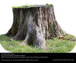 Stump 3 by cindysart-stock
