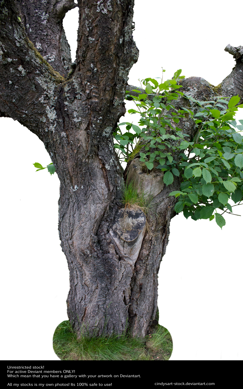 Old tree by cindysart-stock
