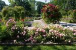 Rose Garden 4 By Cindysart-stock