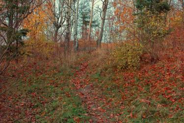 Autumn 8 by CindysArt-Stock