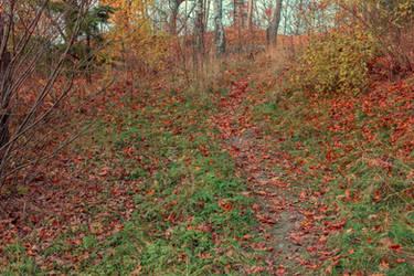 Autumn 9 by CindysArt-Stock