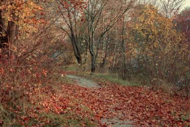 Autumn 10 by CindysArt-Stock