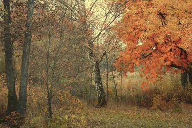 Autumn 14