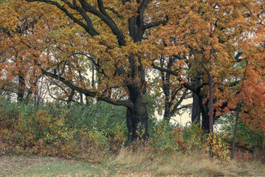 Autumn 17 by CindysArt-Stock