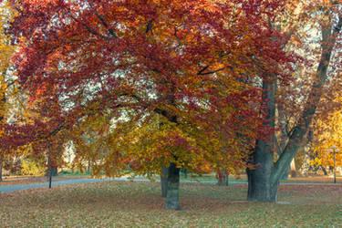 Autumn 18 by CindysArt-Stock