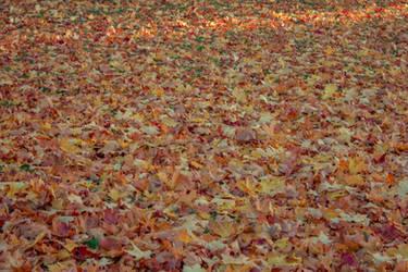 Autumn 19