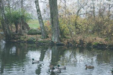 Autumn 20 by CindysArt-Stock
