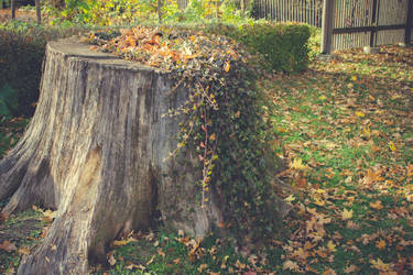 Autumn Stump by CindysArt-Stock