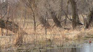 dead swamp 2