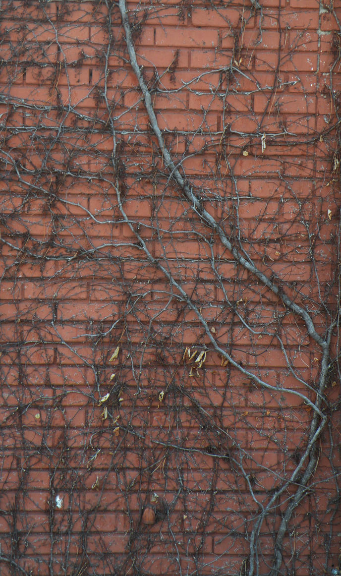 Vines And Bricks By Dougfromfinance On Deviantart