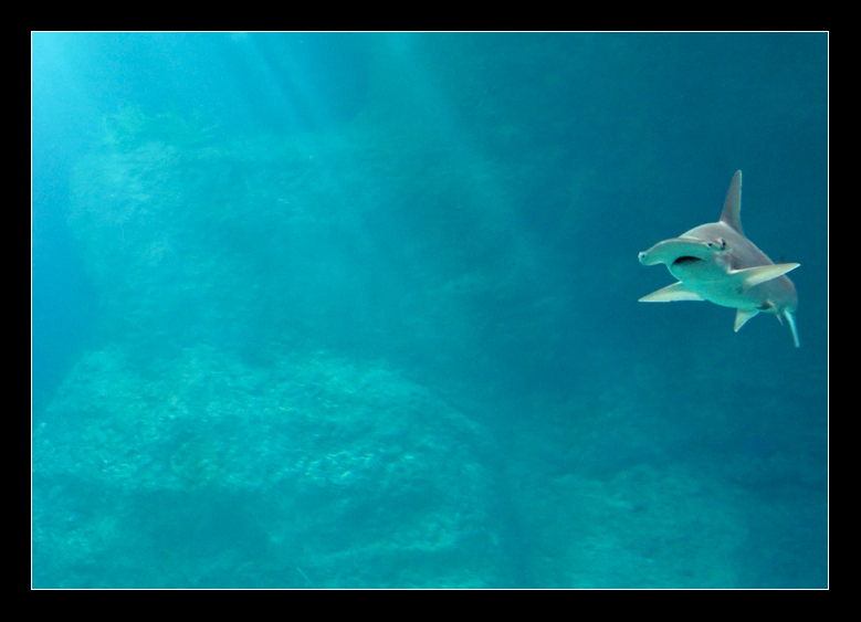 Fly in Water by Zefhar