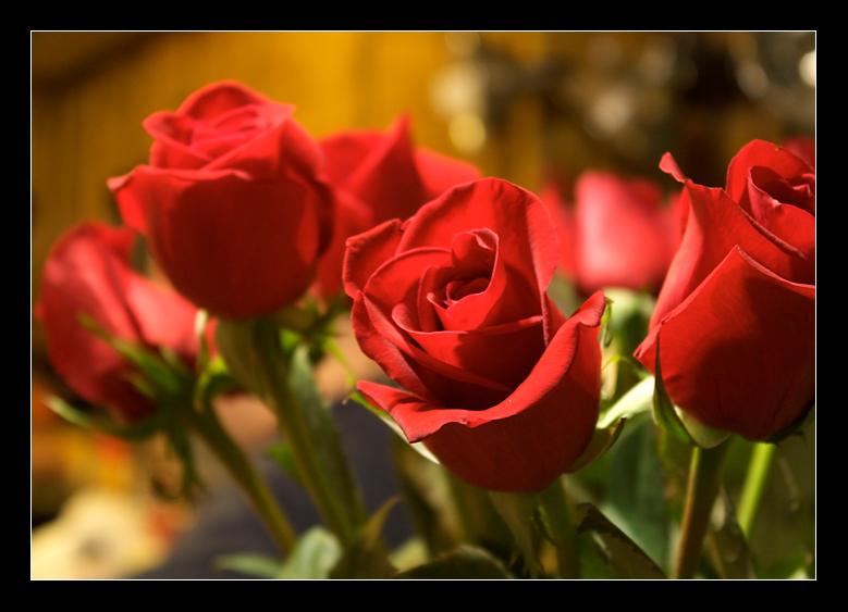 A Valentine's Day Gift by Zefhar