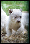 White lion cub by Alannah-Hawker