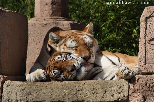 Sibling Love I by Alannah-Hawker