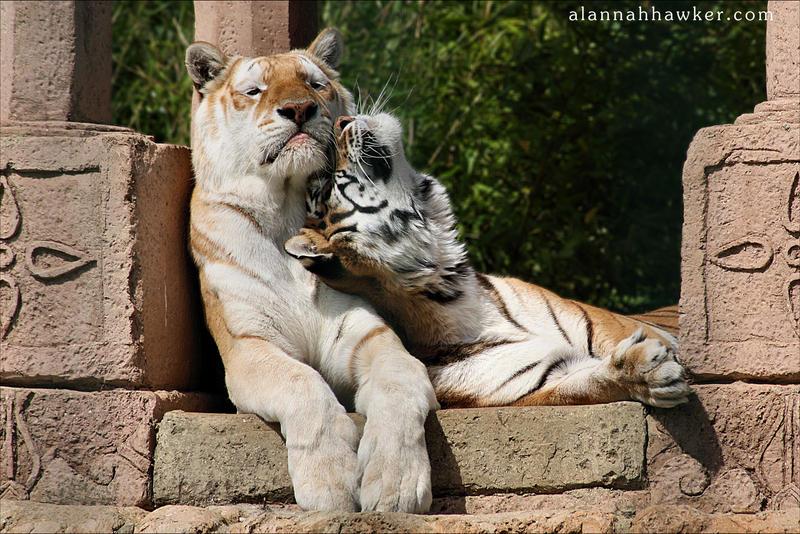 Sibling Love II by Alannah-Hawker