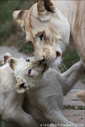 Hugs + Kisses. by Alannah-Hawker