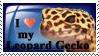 Leopard Gecko by Alannah-Hawker